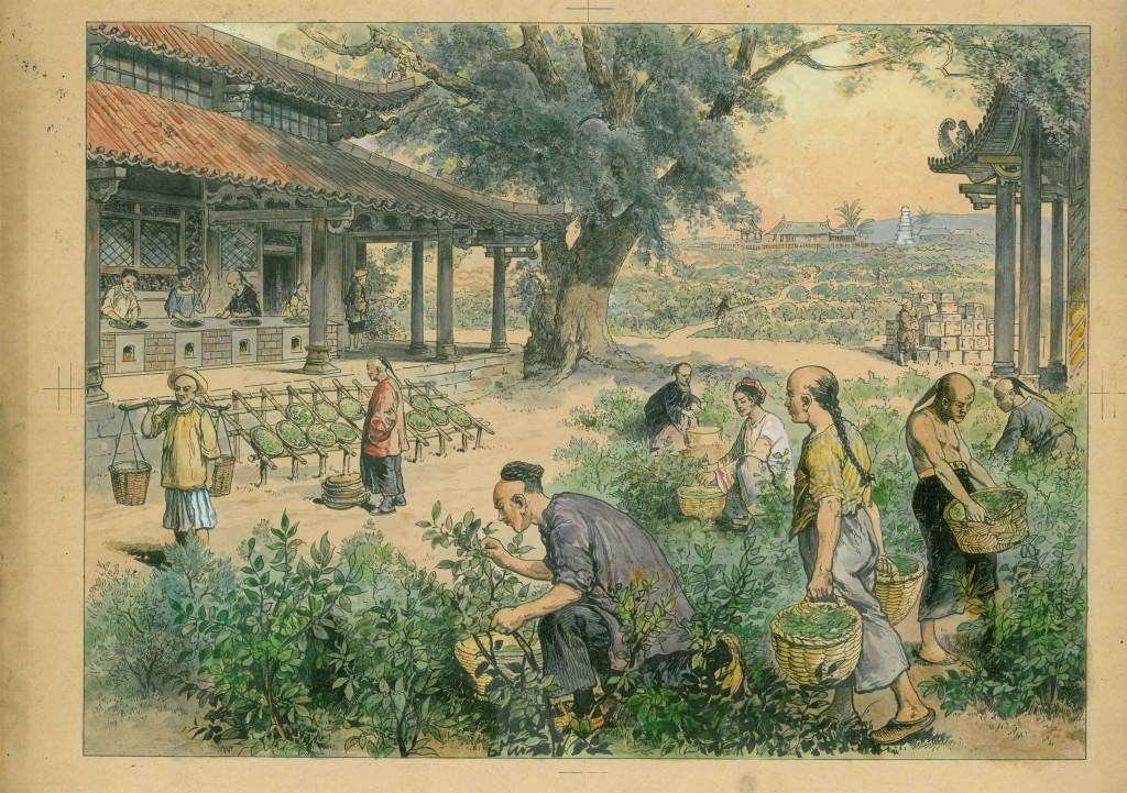 Bogen von Schreiber zum Thema Teeanbau